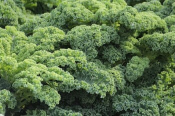A bunch of green kale