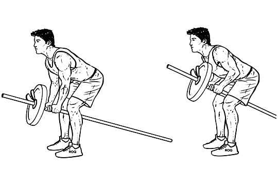T bar row exercise scheme