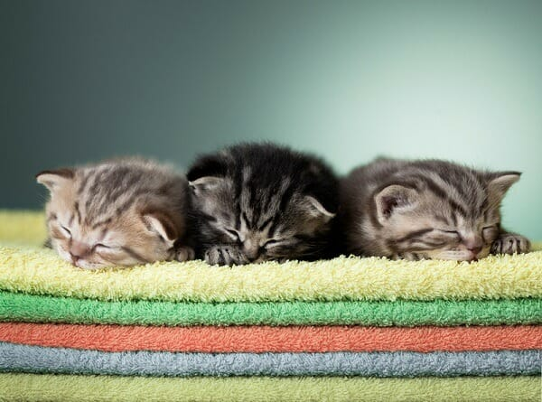 Kittens sleeping on a colorful  towels