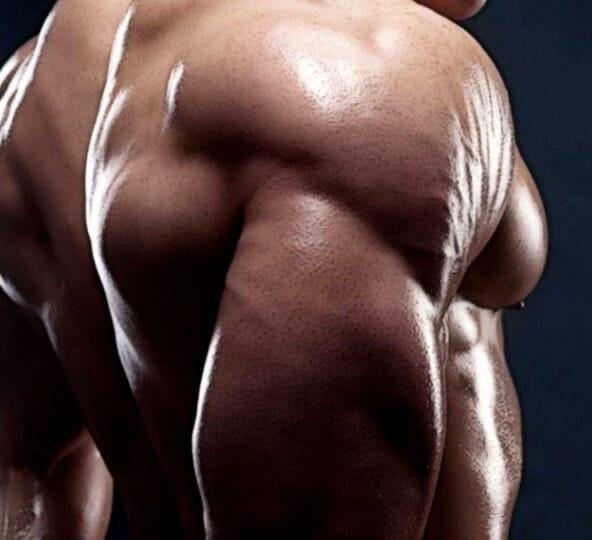bodybuilder's tricep