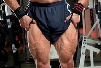 Big quadriceps