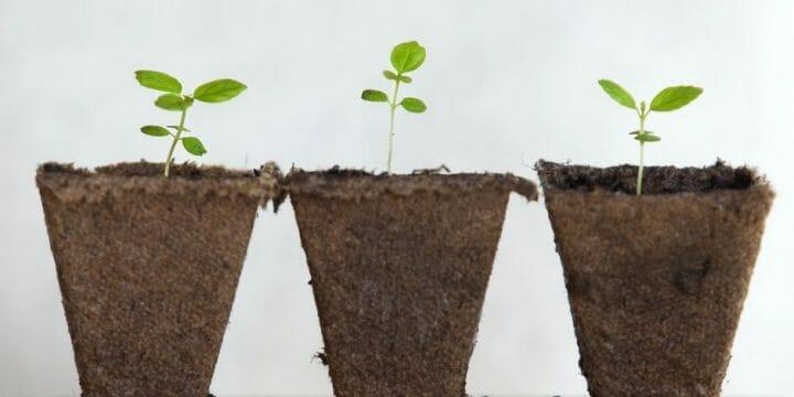 plant vs whey protein