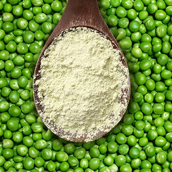 Spoon of Pea Protein and Peace