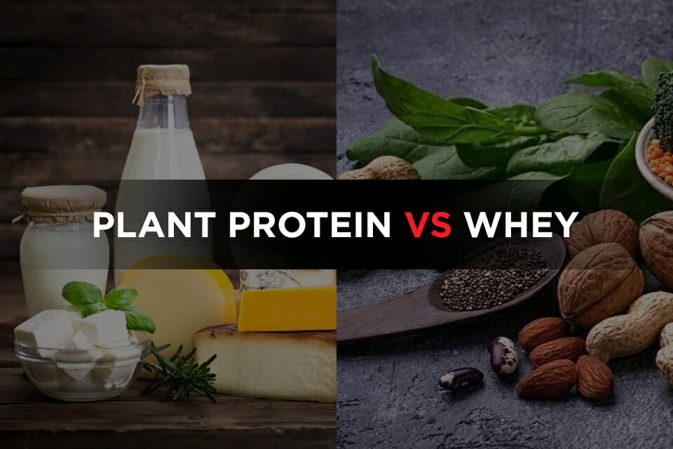 Plant Protein Vs Whey Featured Image