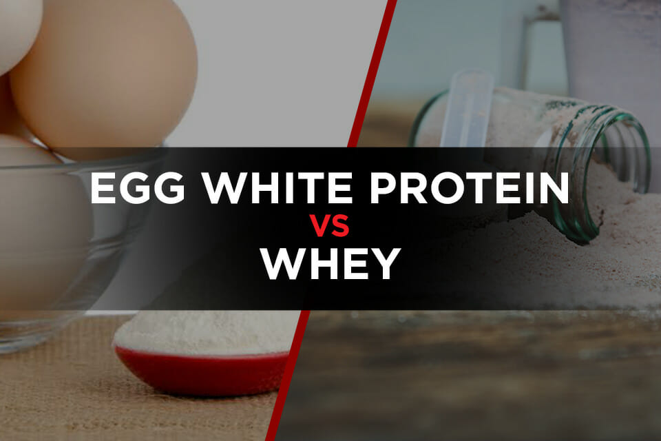 Egg white protein powder vs whey featured image
