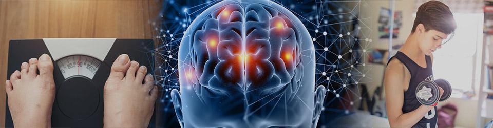 Muscle Growth, Weight Management & Brain Development Image