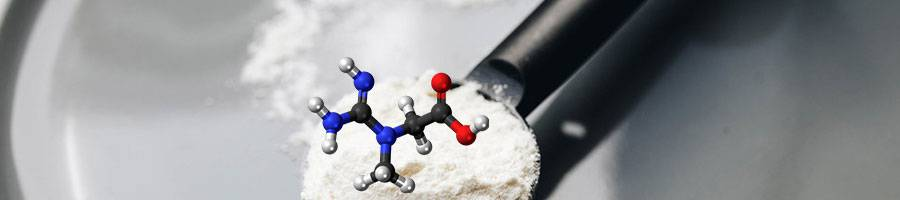creatine molecule with white protein powder in black spoon