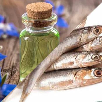 anchovy, borage oil