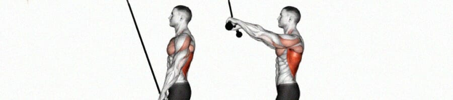 Working muscles when performing straight arm lat pulldown