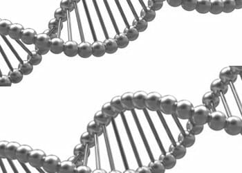 black and white vector image of genetic cells
