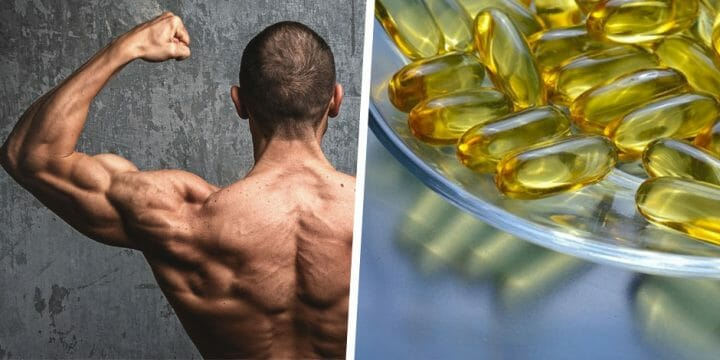 Your guide to fish oil and body building