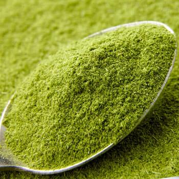 A spoon full of wheatgrass powder